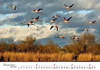 Flamingos 2019 - Produktdetailbild 12