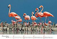 Flamingos 2019 - Produktdetailbild 11