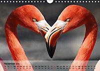 Flamingos Think pink (Wall Calendar 2019 DIN A4 Landscape) - Produktdetailbild 11