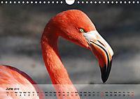 Flamingos Think pink (Wall Calendar 2019 DIN A4 Landscape) - Produktdetailbild 6