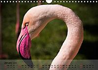 Flamingos Think pink (Wall Calendar 2019 DIN A4 Landscape) - Produktdetailbild 1