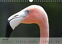 Flamingos Think pink (Wall Calendar 2019 DIN A4 Landscape) - Produktdetailbild 4