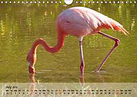 Flamingos Think pink (Wall Calendar 2019 DIN A4 Landscape) - Produktdetailbild 7