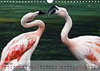 Flamingos Think pink (Wall Calendar 2019 DIN A4 Landscape) - Produktdetailbild 5