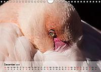 Flamingos Think pink (Wall Calendar 2019 DIN A4 Landscape) - Produktdetailbild 12