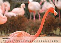 Flamingos Think pink (Wall Calendar 2019 DIN A4 Landscape) - Produktdetailbild 10