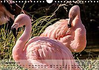 Flamingos Think pink (Wall Calendar 2019 DIN A4 Landscape) - Produktdetailbild 9