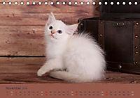 Flauschige Ragdoll Kitten (Tischkalender 2019 DIN A5 quer) - Produktdetailbild 11