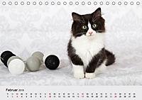 Flauschige Ragdoll Kitten (Tischkalender 2019 DIN A5 quer) - Produktdetailbild 2