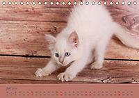Flauschige Ragdoll Kitten (Tischkalender 2019 DIN A5 quer) - Produktdetailbild 7