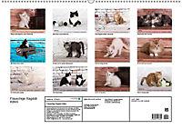 Flauschige Ragdoll Kitten (Wandkalender 2019 DIN A2 quer) - Produktdetailbild 13