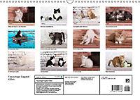 Flauschige Ragdoll Kitten (Wandkalender 2019 DIN A3 quer) - Produktdetailbild 13