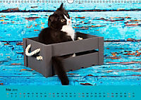 Flauschige Ragdoll Kitten (Wandkalender 2019 DIN A3 quer) - Produktdetailbild 5