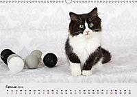 Flauschige Ragdoll Kitten (Wandkalender 2019 DIN A3 quer) - Produktdetailbild 2