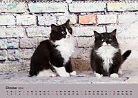 Flauschige Ragdoll Kitten (Wandkalender 2019 DIN A3 quer) - Produktdetailbild 10
