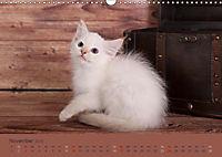Flauschige Ragdoll Kitten (Wandkalender 2019 DIN A3 quer) - Produktdetailbild 11