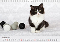Flauschige Ragdoll Kitten (Wandkalender 2019 DIN A4 quer) - Produktdetailbild 2