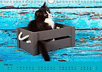 Flauschige Ragdoll Kitten (Wandkalender 2019 DIN A4 quer) - Produktdetailbild 5