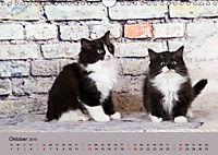 Flauschige Ragdoll Kitten (Wandkalender 2019 DIN A4 quer) - Produktdetailbild 10