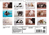 Flauschige Ragdoll Kitten (Wandkalender 2019 DIN A4 quer) - Produktdetailbild 13