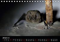 Fledermäuse - Jäger der Nacht (Tischkalender 2019 DIN A5 quer) - Produktdetailbild 1