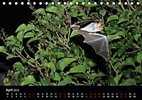 Fledermäuse - Jäger der Nacht (Tischkalender 2019 DIN A5 quer) - Produktdetailbild 4