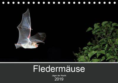 Fledermäuse - Jäger der Nacht (Tischkalender 2019 DIN A5 quer), Otto Schäfer
