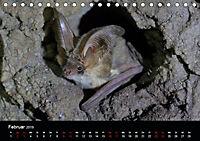 Fledermäuse - Jäger der Nacht (Tischkalender 2019 DIN A5 quer) - Produktdetailbild 2
