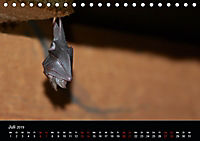Fledermäuse - Jäger der Nacht (Tischkalender 2019 DIN A5 quer) - Produktdetailbild 7