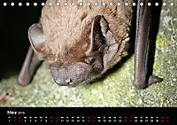 Fledermäuse - Jäger der Nacht (Tischkalender 2019 DIN A5 quer) - Produktdetailbild 3