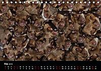 Fledermäuse - Jäger der Nacht (Tischkalender 2019 DIN A5 quer) - Produktdetailbild 5