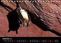 Fledermäuse - Jäger der Nacht (Tischkalender 2019 DIN A5 quer) - Produktdetailbild 12