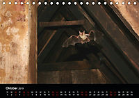 Fledermäuse - Jäger der Nacht (Tischkalender 2019 DIN A5 quer) - Produktdetailbild 10