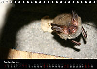 Fledermäuse - Jäger der Nacht (Tischkalender 2019 DIN A5 quer) - Produktdetailbild 9