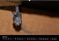 Fledermäuse - Jäger der Nacht (Wandkalender 2019 DIN A2 quer) - Produktdetailbild 1