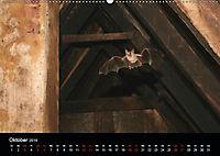 Fledermäuse - Jäger der Nacht (Wandkalender 2019 DIN A2 quer) - Produktdetailbild 4