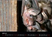 Fledermäuse - Jäger der Nacht (Wandkalender 2019 DIN A2 quer) - Produktdetailbild 3