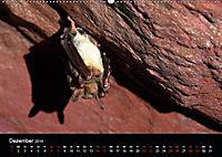 Fledermäuse - Jäger der Nacht (Wandkalender 2019 DIN A2 quer) - Produktdetailbild 6