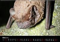 Fledermäuse - Jäger der Nacht (Wandkalender 2019 DIN A2 quer) - Produktdetailbild 7