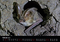 Fledermäuse - Jäger der Nacht (Wandkalender 2019 DIN A2 quer) - Produktdetailbild 12