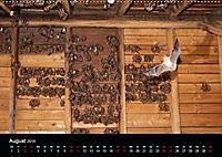 Fledermäuse - Jäger der Nacht (Wandkalender 2019 DIN A2 quer) - Produktdetailbild 13