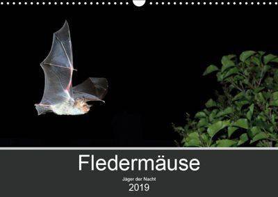 Fledermäuse - Jäger der Nacht (Wandkalender 2019 DIN A3 quer), Otto Schäfer