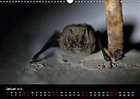 Fledermäuse - Jäger der Nacht (Wandkalender 2019 DIN A3 quer) - Produktdetailbild 1