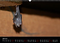 Fledermäuse - Jäger der Nacht (Wandkalender 2019 DIN A3 quer) - Produktdetailbild 7