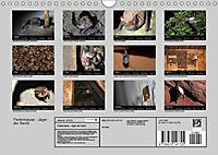 Fledermäuse - Jäger der Nacht (Wandkalender 2019 DIN A4 quer) - Produktdetailbild 13