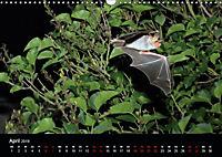 Fledermäuse - Jäger der Nacht (Wandkalender 2019 DIN A3 quer) - Produktdetailbild 4