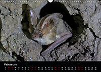 Fledermäuse - Jäger der Nacht (Wandkalender 2019 DIN A3 quer) - Produktdetailbild 2
