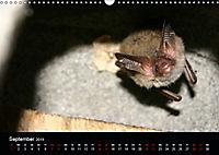Fledermäuse - Jäger der Nacht (Wandkalender 2019 DIN A3 quer) - Produktdetailbild 9