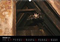 Fledermäuse - Jäger der Nacht (Wandkalender 2019 DIN A3 quer) - Produktdetailbild 10
