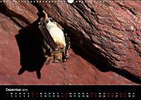 Fledermäuse - Jäger der Nacht (Wandkalender 2019 DIN A3 quer) - Produktdetailbild 12